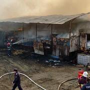 video foto incendiu la o ferma de animale din mizil sute de oi si porci au ars
