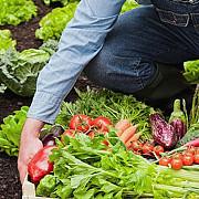 romania este pe primul loc in ue in ceea ce priveste populatia ocupata in agricultura
