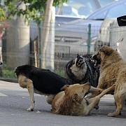 primaria buzau vrea un recensamant al tuturor cainilor din oras si implantarea de cipuri pentru a reduce numarul animalelor
