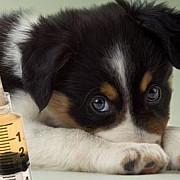 vaccinarea cateilor antirabic este gratuita la ploiesti