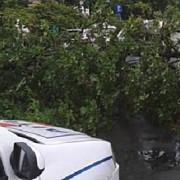 copaci doborati de vant in ultimele ore pe mai multe drumuri din prahova