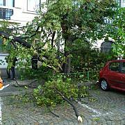 furtuna in capitala opt masini avariate de copacii cazuti