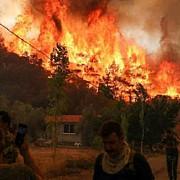 turcia incendiile de vegetatie au cuprins o centrala termica de pe coasta marii egee
