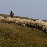 un tren a spulberat o turma de oi