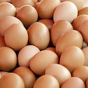 oua infestate cu salmonella in prahova ansvsa a retras de pe piata 330000 de oua din polonia