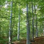 norvegia prima tara care interzice taierile de copaci