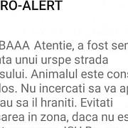 ro-alert nu foarte profesionist dar destul de panicat ursul baaa