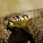 coronavirusul din china ar fi fost transmis la om de la serpi care sunt simptomele