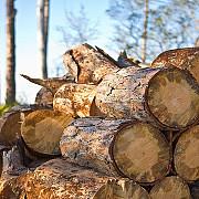 perchezitii la persoane banuite de taieri ilegale de arbori cu un prejudiciu de 460000 de lei