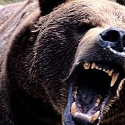 jandarm in stare grava dupa ce a fost atacat de urs in timpul serviciului colegul sau l-a salvat impuscand animalul