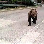 amenda pentru un turist care hranea un urs la sinaia