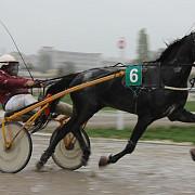 trap galop ponei dresaj si multe surprize sambata pe hipodromul ploiesti in reuniunea de derby