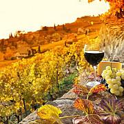 programul national de sprijin in sectorul vitivinicol 2019 - 2023