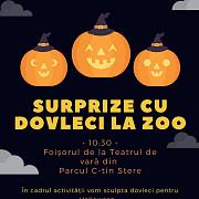 surprize cu dovleci la zoo