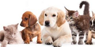 se infiinteaza politia animalelor autoritatile pot actiona fara mandat daca un animal este torturat