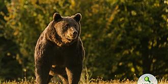 presa internationala relateaza cazul ursului ucis in romania de printul emanuel von und zu liechtenstein