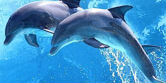 capacitatile intelectuale deosebite ale delfinilor