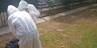 pesta porcina africana se extinde in judetul prahova