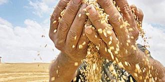 fermierii nemultumiti de preturile produselor agricole