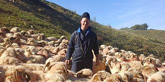cum a ajuns ghita ciobanul un brand in agroturism
