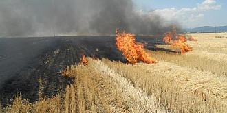 avertizare mae - risc crescut de incendii de vegetatie in grecia