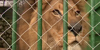 leii lui nutu camataru pleaca la galati