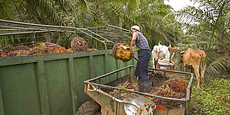 cum a ajuns uleiul de palmier in aproape toate alimentele un lobby asemnatator cu cel al tutunului si alcoolului