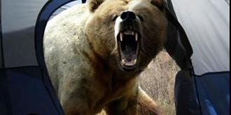 proiecte romanesti de protejare a ursului si acvilei tipatoare mici in topul programului life al ce